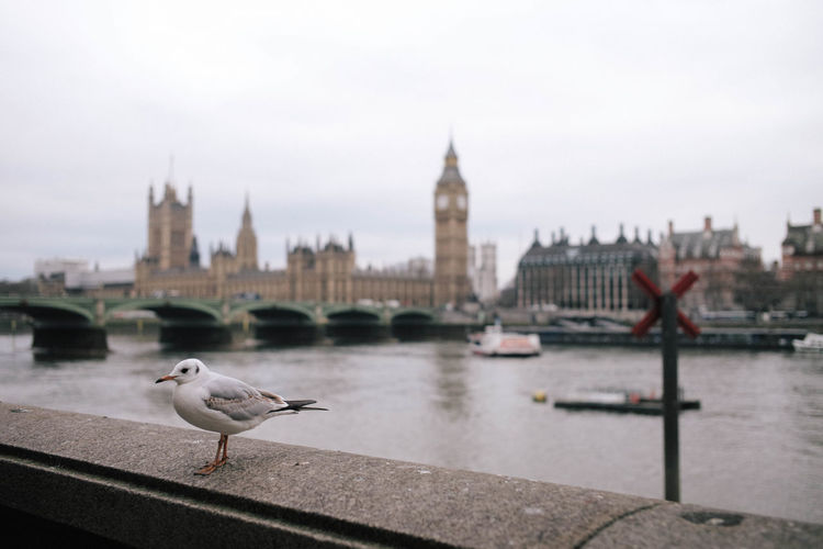 London Big Ben Hanging Out Birds Cloudy Taking Photos Uk This Is What I Saw