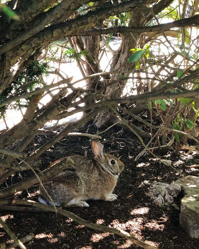 Rabbit Tree Plant Sunlight Nature Outdoors