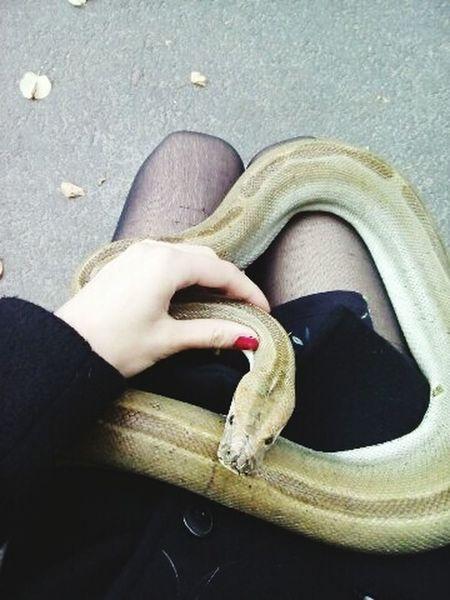Работа такая First Eyeem Photo змеи работатакаяработа няша😺 приключенияначались Природа животные животное Cute девушка Россия интересно приключения мимими апасна Nature