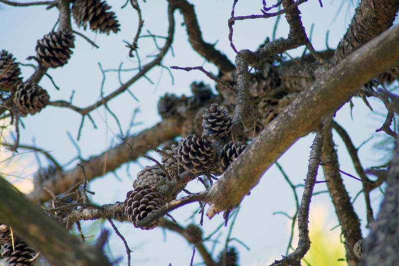 Low angle view of a bird perching on branch
