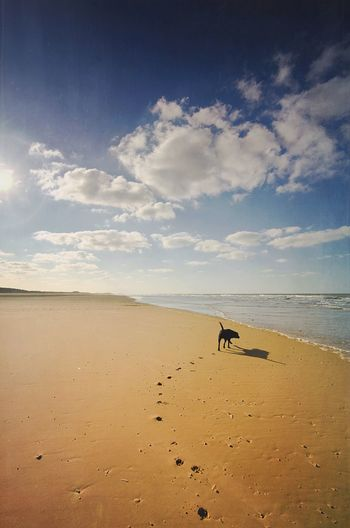Paw prints of dog walking on sea shore