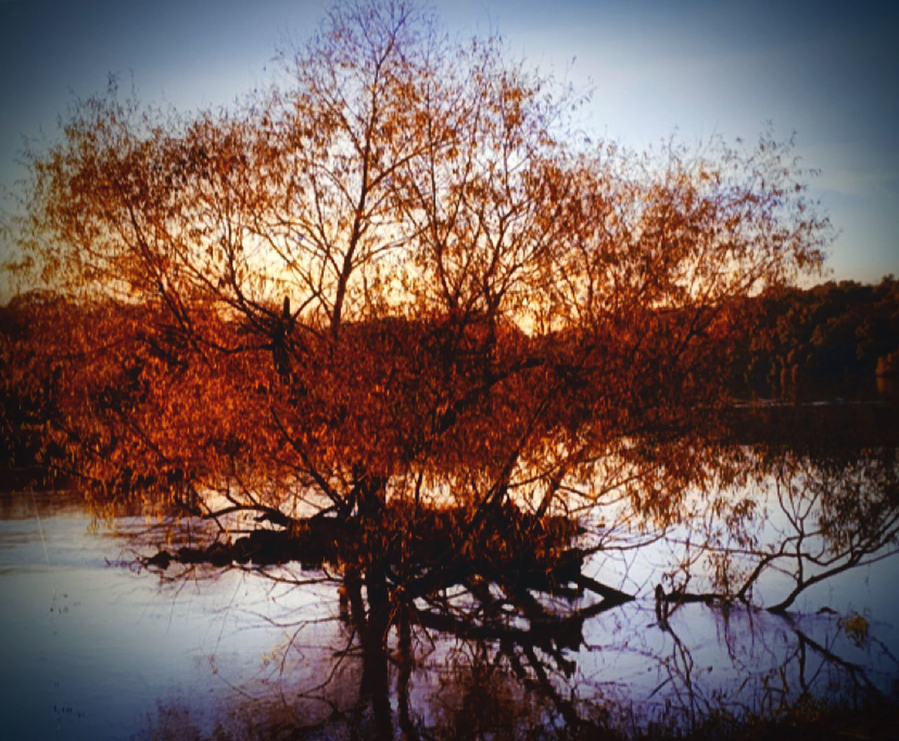 tree, reflection, plant, water, lake, sky, tranquility, beauty in nature, nature, scenics - nature, tranquil scene, no people, autumn, bare tree, waterfront, outdoors, non-urban scene, sunset, change