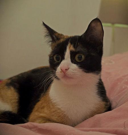 Duchesse Cat Cats