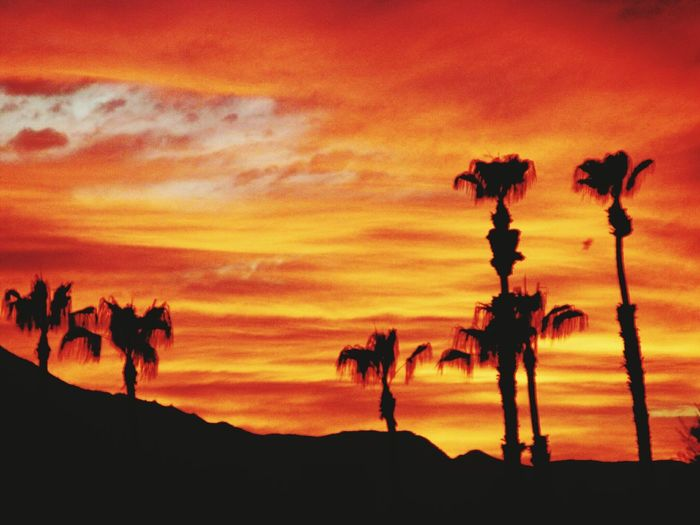 Nature On Your Doorstep Mt San Jacinto State Park in the background Sunset Palm Trees Tree Deserts Around The World