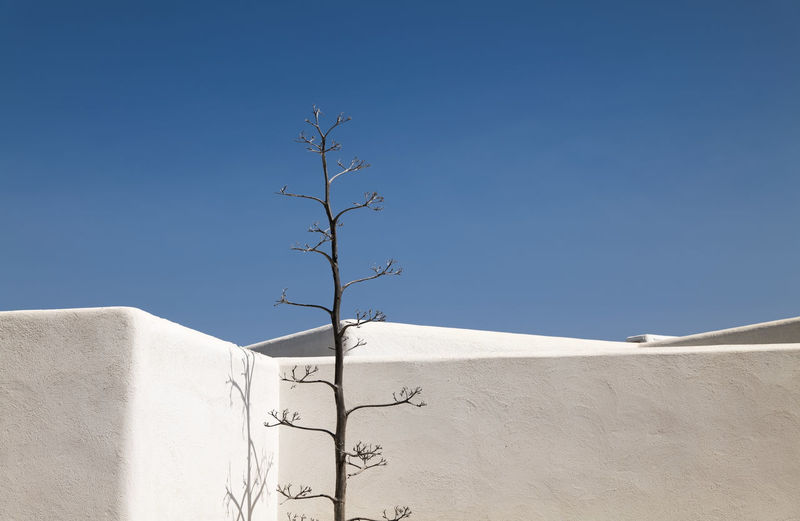 Low angle view of agave plant against white building with blue sky