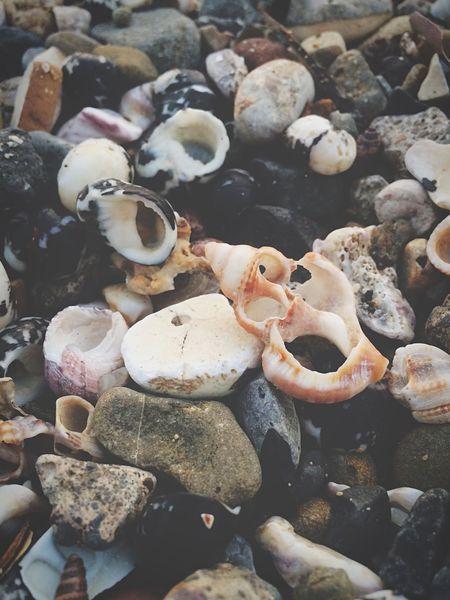 Life under. Shells Beach Rocks Stones Closeup Photooftheday Photography Mumbai India Placesinindia Natgeo Nature Broken Cracked