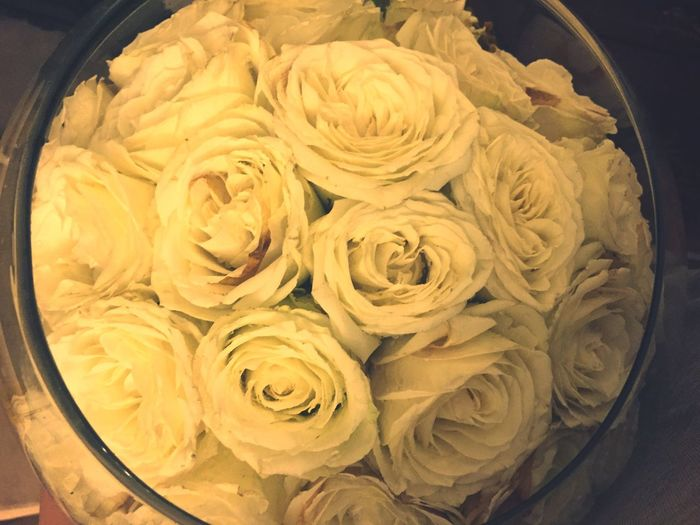 Beautiful White Roses ?
