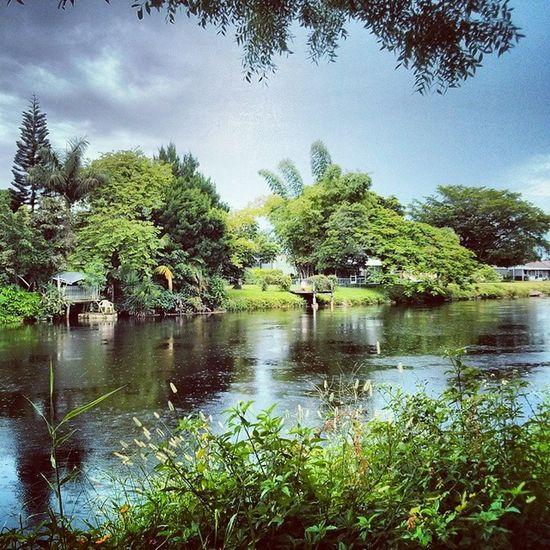 Walk in the Park Summerrain Goldengate Florida Floridaclouds