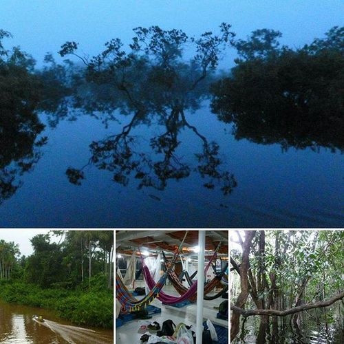 Brazil Amazonriver Floatingforest Gapyear Travel Hammock Wherethewildthingsare