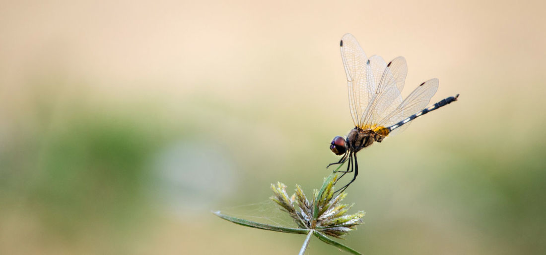Dragonfly Insect Nature Animal Wildlife Close-up Plant Beauty In Nature No People Animals In The Wild Butterfly - Insect Outdoors Day Wildlife & Nature Loveyou Blur Pose Posture EyeEmNewHere EyeEmNewHere
