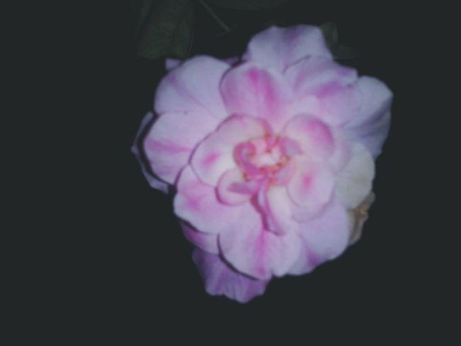 """""""Nessa cidade tem uma rosa, de pálida agonia a me esperar"""". Vscocam Vscobrasil"""