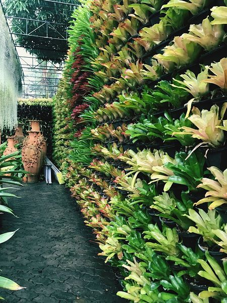 The great green wall Green Wall Wall Growth Plant Green Color Day Nature No People Beauty In Nature Plant Part Freshness Green Water Park