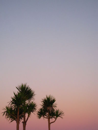 Beauty In Nature Chill Chillout Chillout Day Clear Sky Daybreak Early Morning Gradation Gradation Sky Idyllic Low Angle View Palm Tree Quiet Quiet Moments Sky Tranquil Scene Tranquility Tree Colour Of Life
