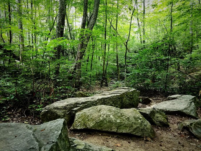 EyeEm Nature Lover Adventure Escaping South Carolina Landscapes Eyeem Market Foothills Nature Walking In The Woods Gs7 Forest Summertime Go Outside Enjoying Life Park Mountains Appalachian Mountains First Eyeem Photo Feel The Journey