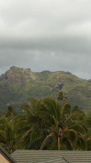 Kauai Is Green!