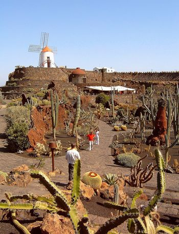 Cactus Garden Canary Islands Garden Lanzarote Island Lanzarote-Canarias Outdoors Plant Windmill