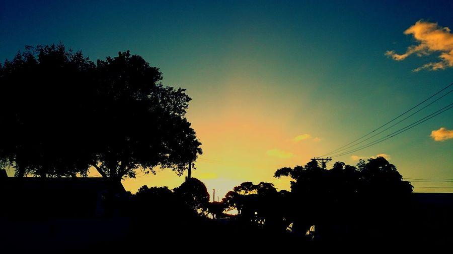 Mount Albert Auckland Tamaki Makaurau Sunset Fontenoy Tree Silhouette Sunset Sky Nature No People Outdoors