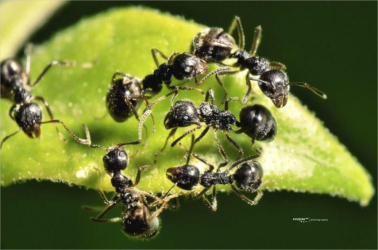 Black Garden Ants [ Lasius Niger]. EyeEm Macro Macro Photography Macro EyeEm Nature Lover K.u.n.c.u.n.l.u