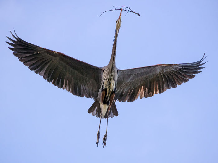 A bird flying