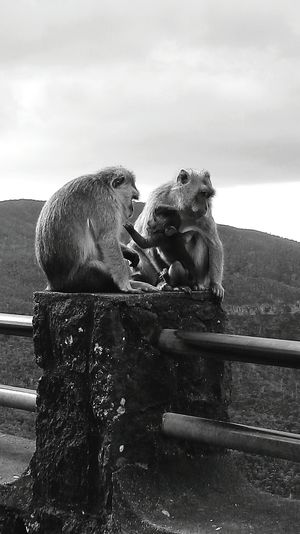 Animal Themes Animals In The Wild Animal Wildlife Group Of Animals Forest Monkey Protecting What We Love Landscape Monkey Family Love Bonding Black & White Photography