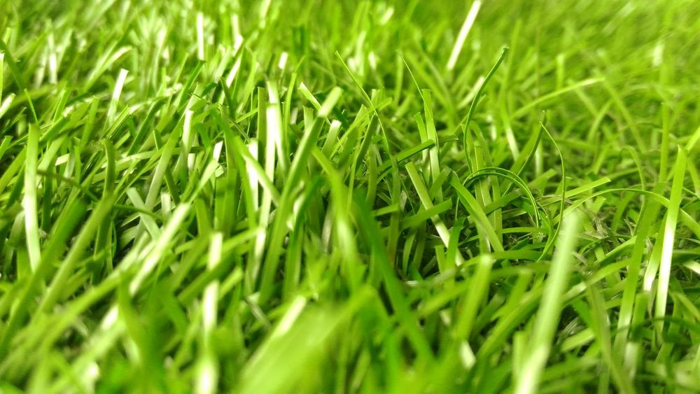 Green Color Close-up No People Backgrounds Plastic Zenfone Photography Bala_photography MyClick Lovephotography  Eye4photography  Hello World Mobileclicks Plasticgrass Grass Plastic Grass