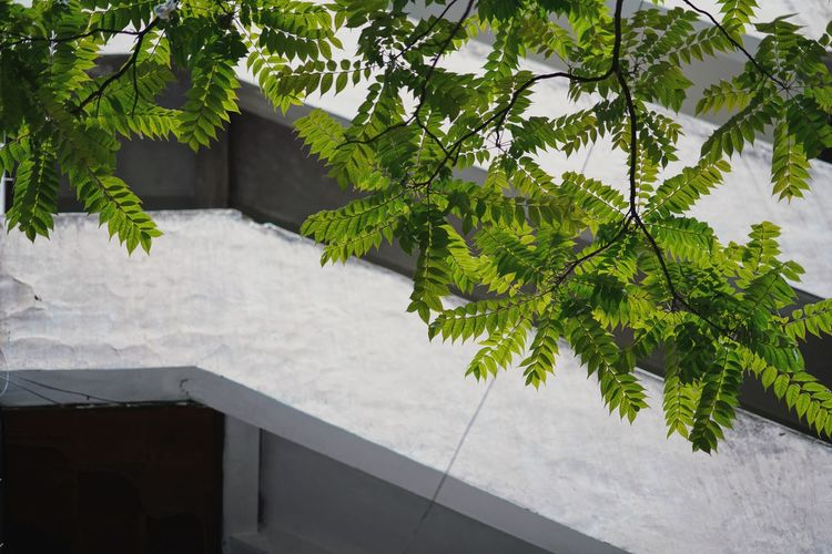 High angle view of tree by swimming pool