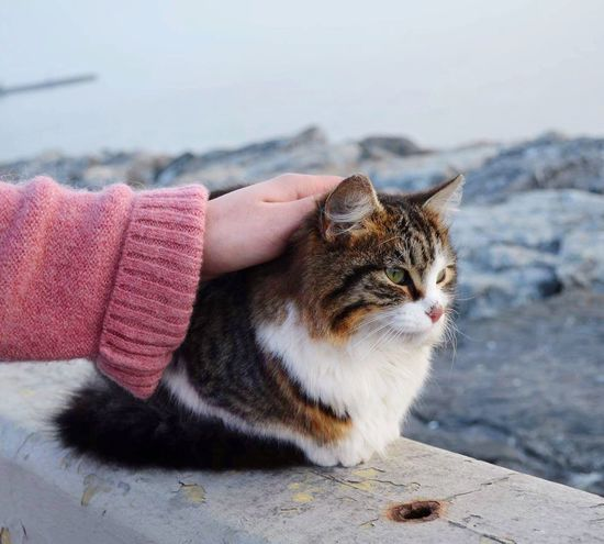 Domestic Cat One Animal No People EyeEmNewHere EyeEmNewHere Flying High