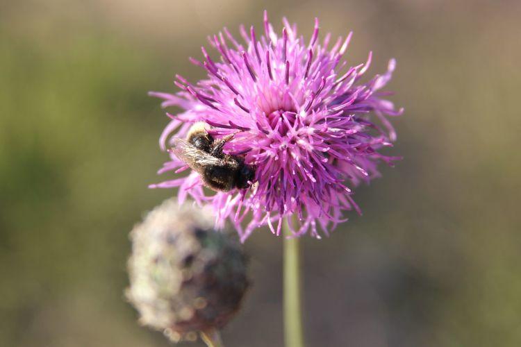 Пчелка Flower