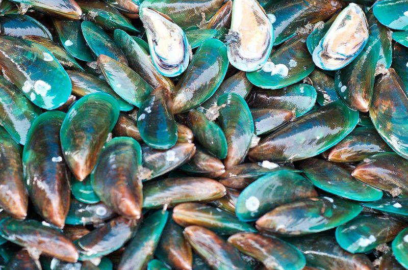 Full Frame Abundance Seafood Close-up Shell Nature Food And Drink Animal Shell Mussel Raw Food Turquoise Colored Open Market