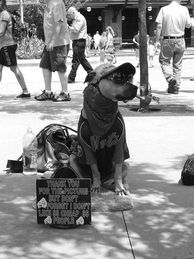 NYC Street Photography Mets Stadium NYMets The Biggest Fan  in the world. Dog dressed in The Mets outfit (c) 2015 Shangita Bose All Rights Reserved Synchroonkijken Neus Natural Light Portrait The Innovator