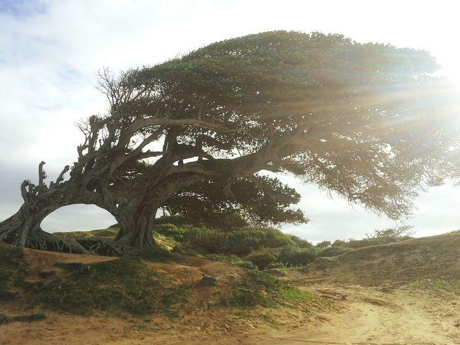Tree Day Nature Amor Love Natal - RN árvore do amor em natal RN