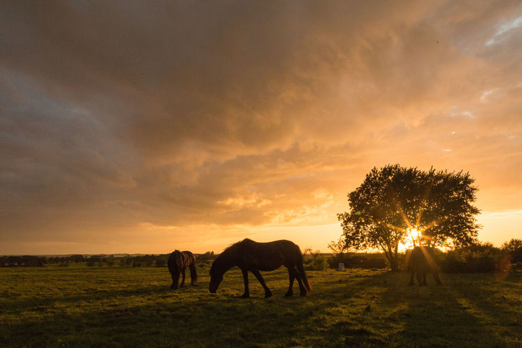 Silhouette horse grazing on field against sky during sunset