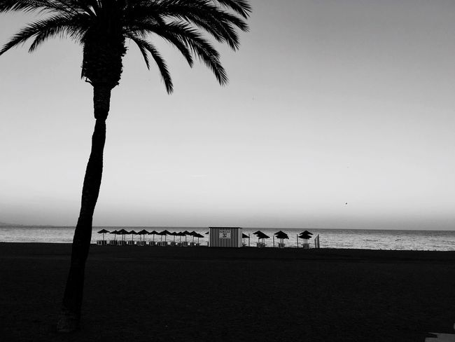 Beach Palm Tree Sea Horizon Over Water Sand Tranquil Scene Outdoors Nature Tranquility Sky Clear Sky No People Blackandwhite