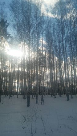 Taking Photos The Spring Is Coming EyeEm Nature Lover People Watching Hello World Russian Winter Walking Around Sun_collection A Walk In The Woods