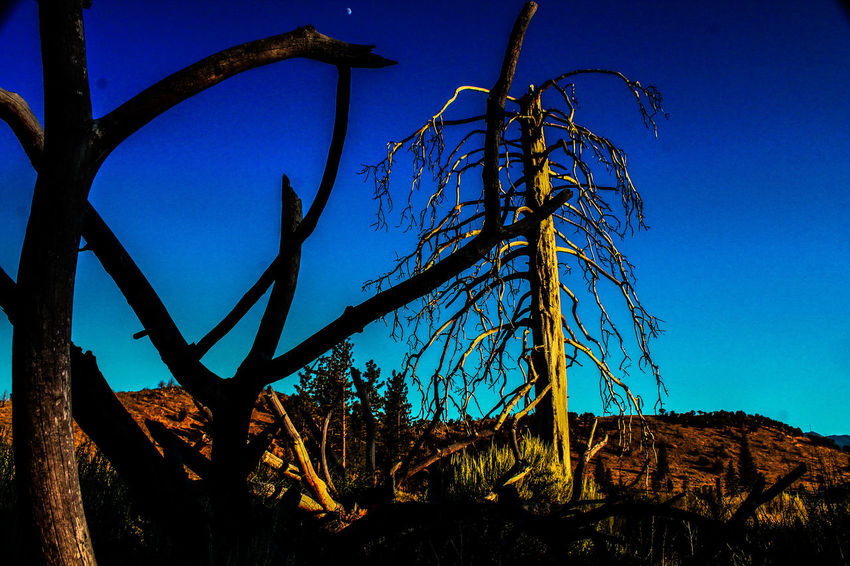 Lake Shastina C.a Diamond Mafia Photography Fine Art Photography Desert Beauty Sky Vibrant Colors Tree Branches Landscape Creepy Places Farmland Mountains Desert Landscape