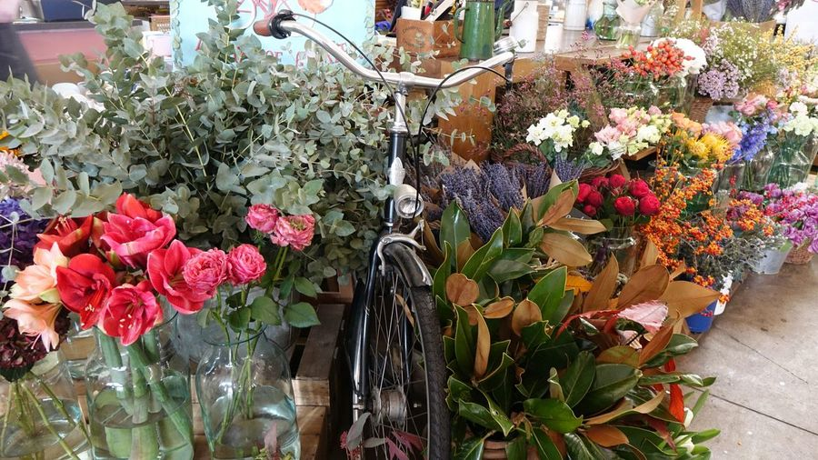 Bicycle Original Bright Colorful Farmer Background Garden Flower Flower Market Multi Colored Retail  Variation Flower Head Flower Shop Choice Bouquet For Sale Various Price Tag Plant Life Display Shop Greenhouse Raw Window Display Collection Botany Blossom Farmer Market Market A New Beginning