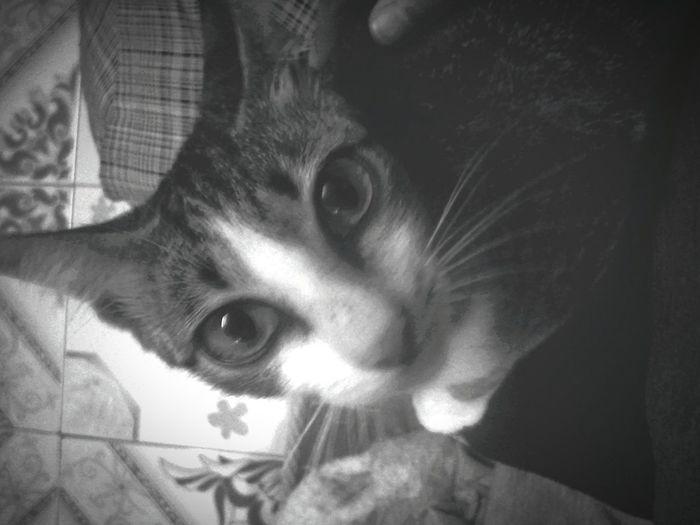 Omg! She got the big eye and small face.. Saya rasa dia perlu makan banyak supaya besar macam patung saya.. My Pet Catsofinstagram Cat Monochrome Dark Blackandwhite Hi! Thin Cat StarInHerEyes Staring At Me Meow!