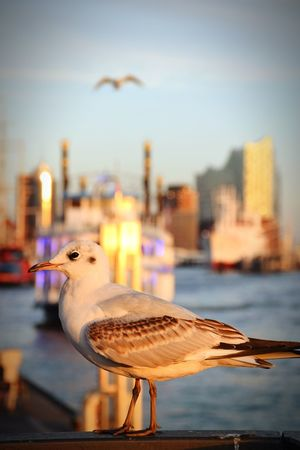 Nature Beauty In Nature Sunlight Sunshine Outdoors Focus On Foreground Animal Themes Animals In The Wild Animal Wildlife One Bird On Focus Gull Port⚓ Silhouette Light And Shadow River Elbe ♥️ Bird Water City Perching Cityscape Seagull Harbor Nautical Vessel Reflection Sea Bird Waterfront Skyscraper Boat Water Bird Water Vehicle Financial District