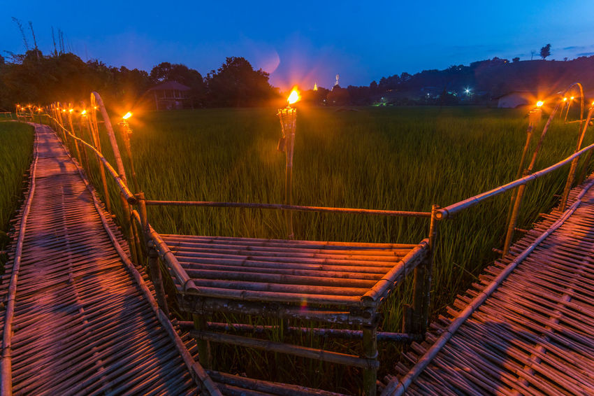Bamboo Bridge in Paddy Field, Chiang Rai, Thailand. Bamboo Bridge Bamboo Bridge In Paddy Field, Chiang Rai, Thailand. Blue Bridge Green Color Illuminated Lens Flare Night No People Outdoors Paddy Field Railing Scenics Sky Solitude The Way Forward Tranquil Scene Tranquility