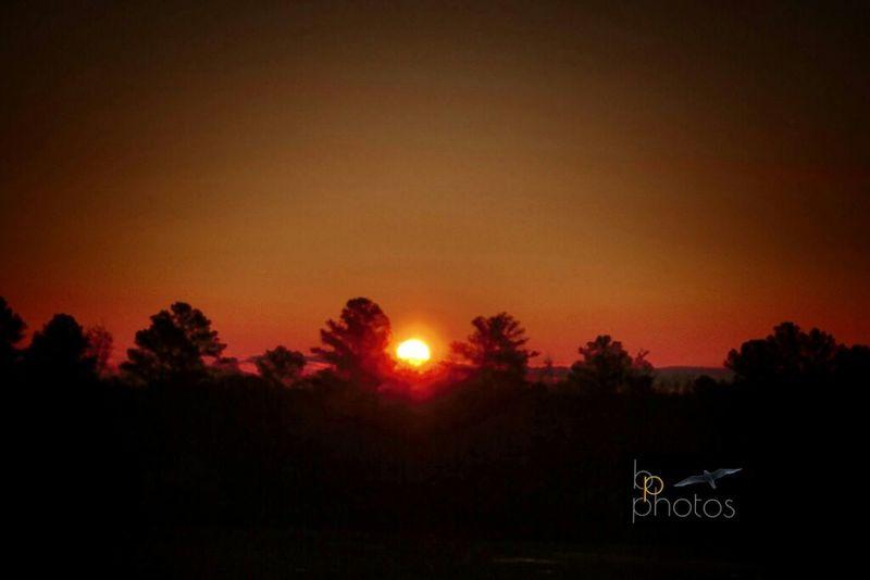 Sunrise Sunnydelight