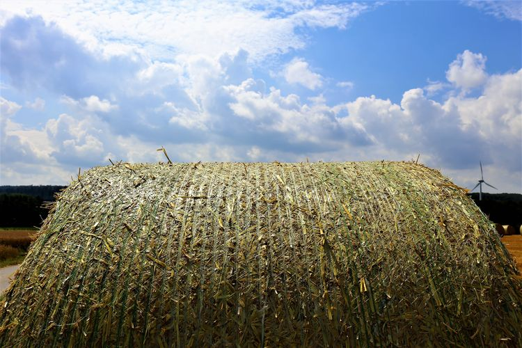 Rural Scene Hay Farm Nature Plant No People Field Landscape Agriculture Land Beauty In Nature Grass Bale  Tranquility Environment Outdoors Plantation Sky Cloud - Sky Day Growth