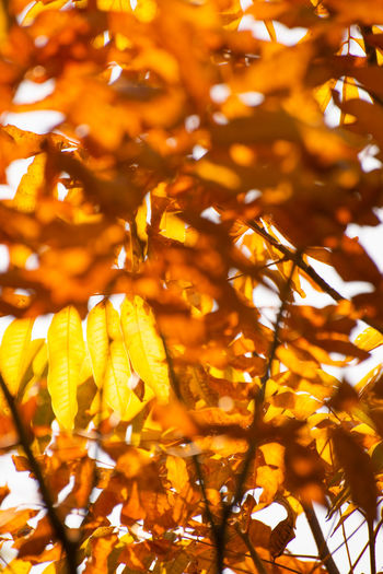 Color of Autumn Plant Growth Tree Yellow Leaf Autumn Nature Branch Sunlight Leaves