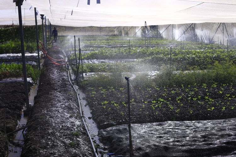 Plant Growth Land Nature Field No People Outdoors Day Eco Farm Farmland Farming Water Architecture Landscape Built Structure Motion Dirt Environment Wet Spraying Agriculture Greenhouse Flowing Water