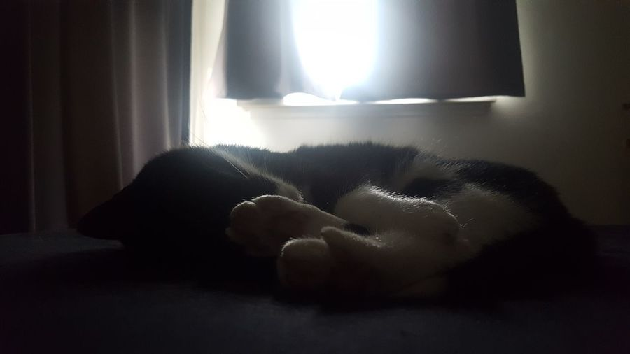 Holy cat Perfect Moment Love Indoors  Beauty In Nature Black And White By Nature Blackandwhite Black And White Domestic Cat Domestic Animals Sleeping Sleeping Cat Cat Light And Shadow Window Light Home Interior Window Curtain Bed Bedroom Domestic Room Day