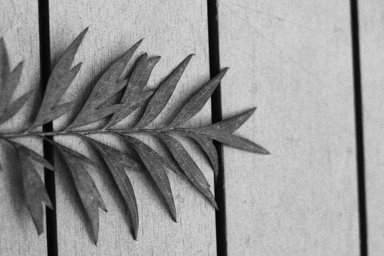Directly above shot of leaves on wall