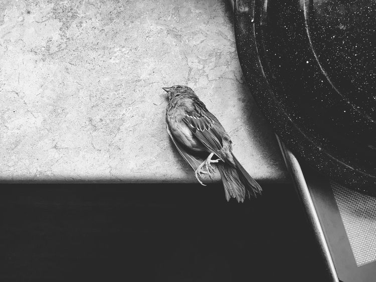 Dead bird Life Nature Death Bird Still Life Table Indoors  No People Close-up Day