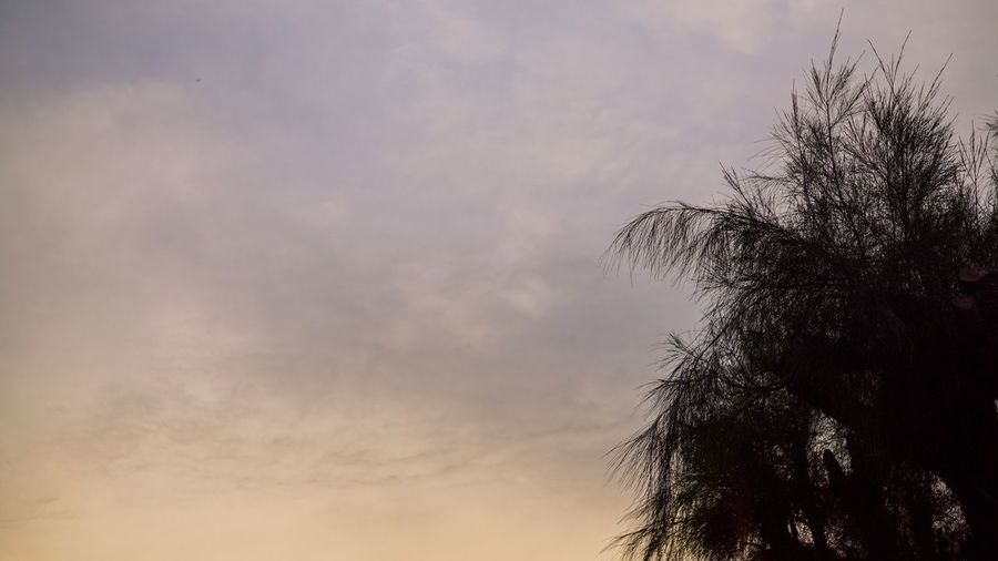 Better Sky Low Angle View Cloud - Sky Nature No People Tree Beauty In Nature Outdoors Scenics Day Eveining