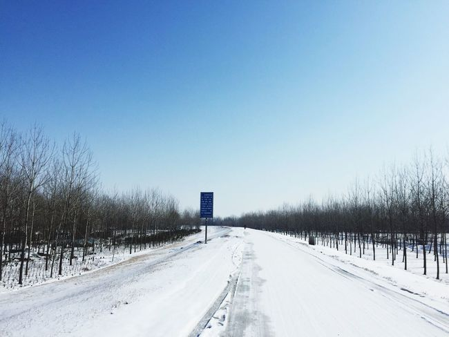 Cold Temperature Winter Snow Bare Tree Clear Sky The Way Forward Road Weather Blue Day Tree Nature Frozen Outdoors Scenics