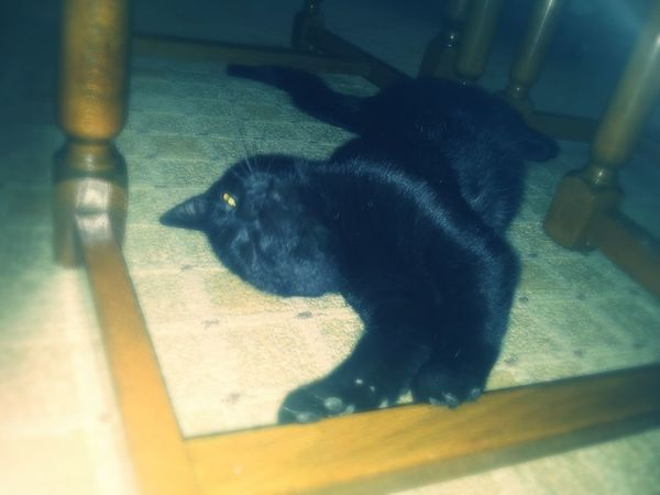 My Little Cat☺ Tired Yes, Puffy  ♡
