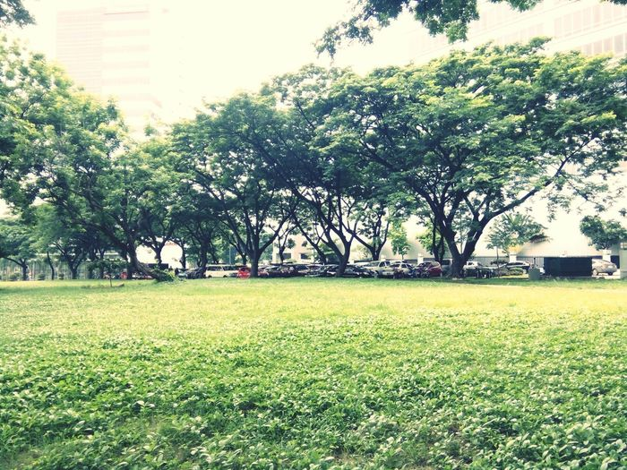 Tree Grass Green Color Lawn Outdoors Growth Day No People Nature Park - Man Made Space Building Exterior Soccer Field Sky Freshness City Beauty In Nature